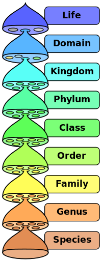 200px-Biological_classification_L_Pengo_vflip.svg.png
