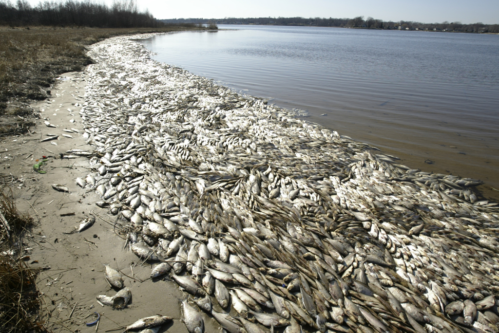 dead-fish (1).jpg