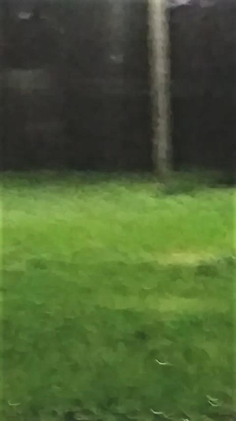 Framess_000257.png