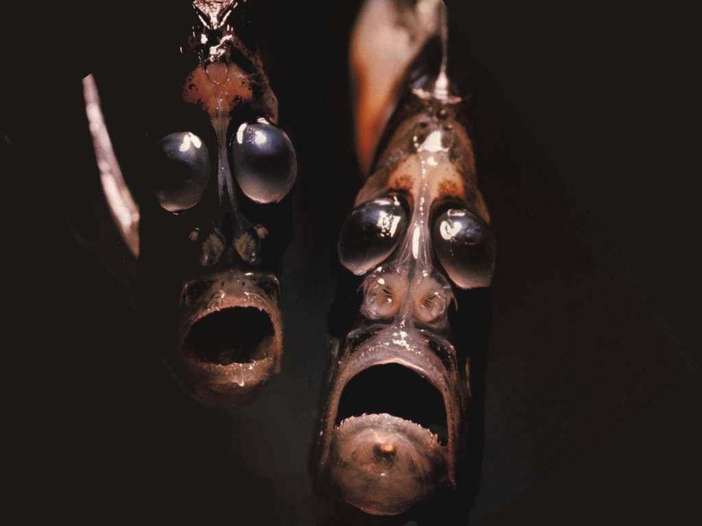 hatchetfish_face_killah.