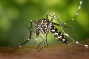 mosquito-e1433180297149.jpg
