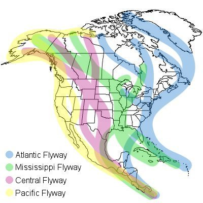 Circle Sweeps, HAARP Rings, and Scalar Squares are Often