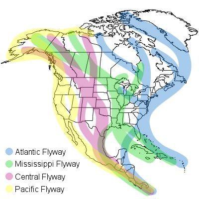 north-america-migration-flyways.jpg