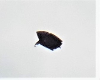 UFO CLOSE UP 2B.JPG