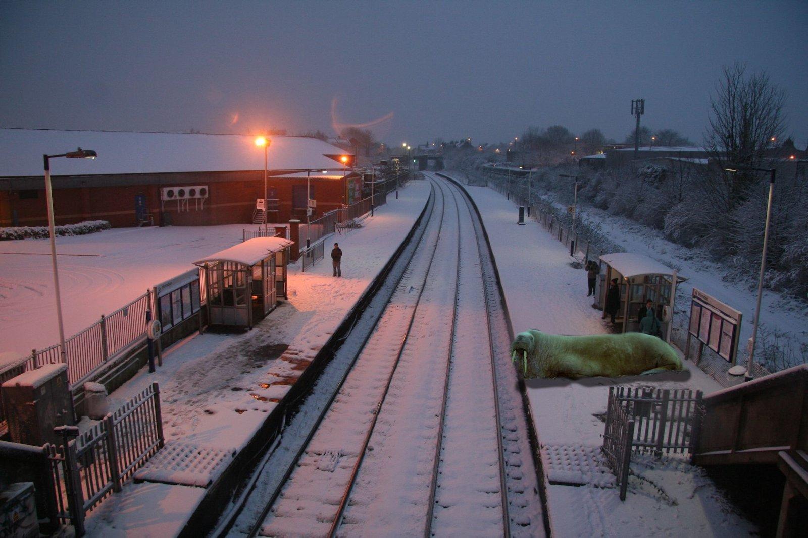 wulrus at station.