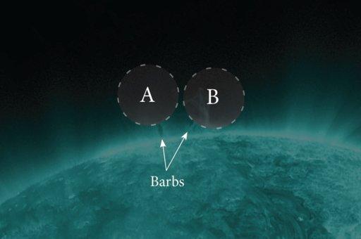 barbs.jpg