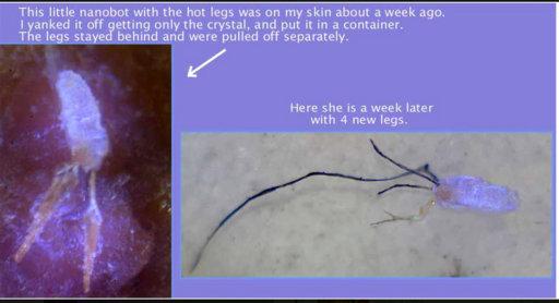 hot legs1.jpg