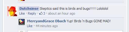 birds and bugs.JPG