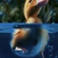 Tarka the duck